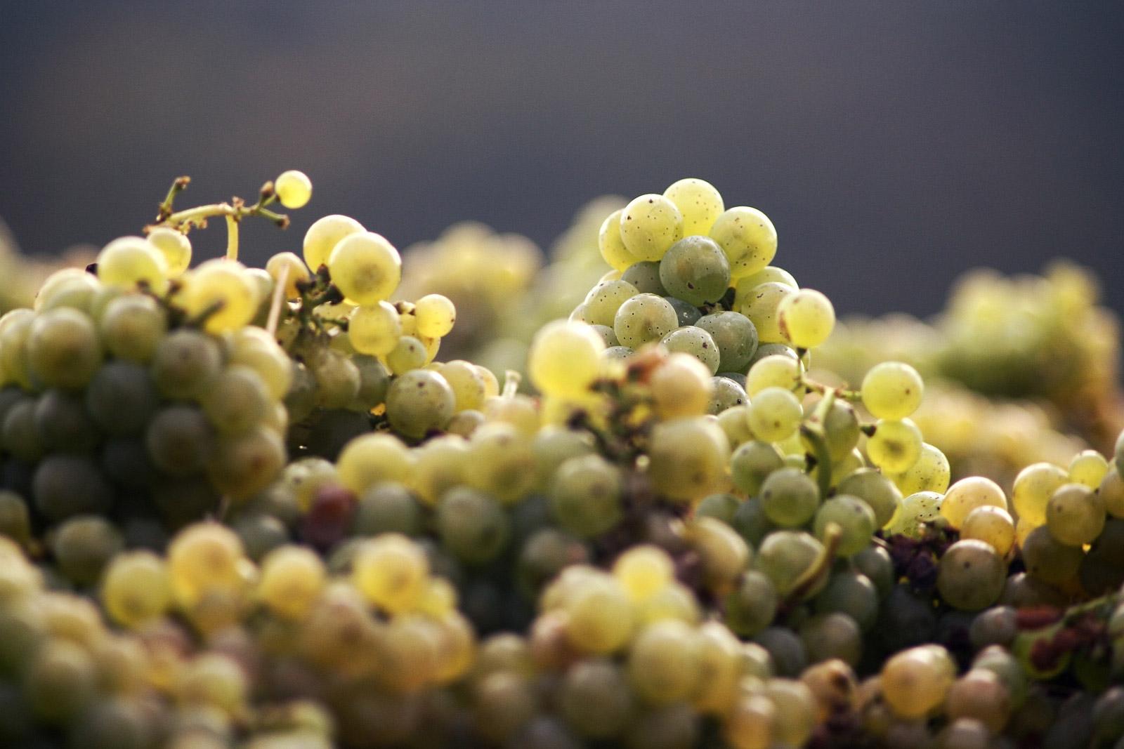 chevron villette sarah jessica parker vin sjp